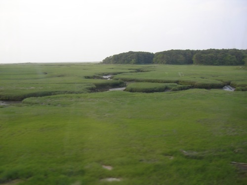 Beautiful salt marsh
