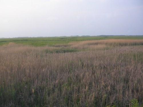 Expansive marshland